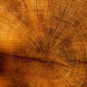 Texture de l'arbre coupé — Photo