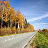 Country road in fall season. Latvia — Stock Photo