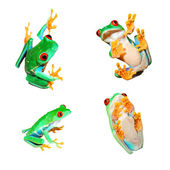 Collage of red-eye frogs Agalychnis callidryas isolated on white — Stock Photo