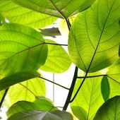 Grüne tropische pflanzen nahaufnahme — Stockfoto