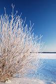 Снег на дерево на берегу замерзшего озера на рассвете — Стоковое фото