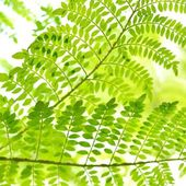 Green tropical plants close-up — Stock Photo