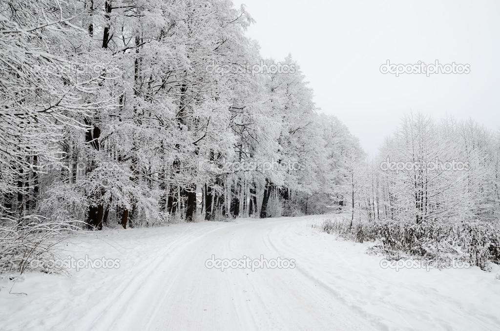 Сколько градусов мороза может выдержать капуста