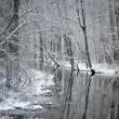 ストック写真: Foresr river in winter