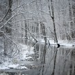 Foto de Stock  : Foresr river in winter