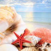 Sea star and shells on the sandy beach — Stock Photo