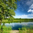 Tree at the lake shore in summer — Stock Photo #37436585