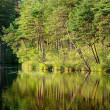 Forest lake with a reflection — Stock Photo