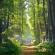 Road in a beautiful forest in the morning — Stock Photo #37436965