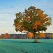 Colorful lonely tree in the field in Autumn — Stock Photo #37437033