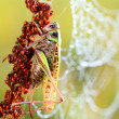 Common grasshopper in the morning — Stock Photo