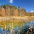 Autumn lake landscape against blue sky — Stock Photo #37437143