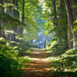 Stock Photo: Road in a beautiful forest in the morning