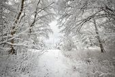 Winter wonderland in snow covered forest. Latvia — Stockfoto