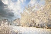 雪の中で冬のワンダーランド森林覆われています。ラトビア — ストック写真