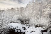 Snow in the bog and forest in Latvia — Stock Photo