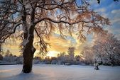 Snow covered winter countryside at the sunset in Latvia — Stock Photo