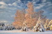 Snow covered winter forest in Latvia — ストック写真
