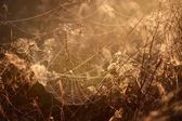 Beautiful spider web with water drops close-up — Stock Photo