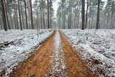 First snow in the forest and a sand road — Stock Photo