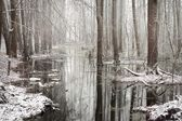 First snow in a forest swamp landscape — Stockfoto
