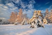 Snow covered winter forest in Latvia — Stock Photo