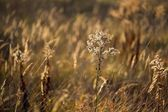 Grass close-up during the sunset — Stock Photo