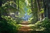 Road in a beautiful forest in the morning — Stock Photo