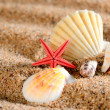 Sea star and shells on the sandy beach — Stock Photo #38697309