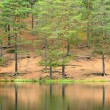 Dark pine forest and a lake in Autumn — Stock Photo