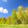 Stock Photo: Classical meadow and forest spring landscape