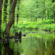 Stock Photo: Forest river scene