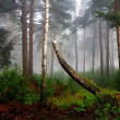 A north forest in fog. Latvia — Stock Photo