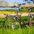 Stock Photo: Old vintage brown bicycle near fence of flower field.