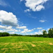 Classic rural landscape. Green field against blue sky — Stock Photo #38697963