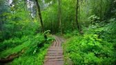 Stairway in forest disappearing in fog — Stock Photo