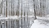 First snow in a forest swamp landscape — Stock Photo