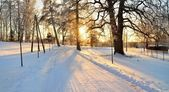 Winter wonderland in snow covered forest. Latvia — Stock Photo