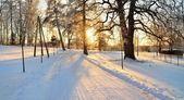 冬季仙境中雪覆盖森林。拉托维亚 — 图库照片