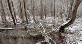 Mooie winter lake landschap in letland — Stockfoto