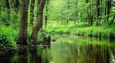 Forest river scene — Stock Photo
