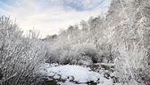 Winter wonderland in snow covered forest. Latvia — Stockfoto