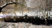 śnieg na drzewach w rydze parku i latarnia morska — Zdjęcie stockowe
