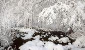 озеро красивый зимний пейзаж в латвии — Стоковое фото
