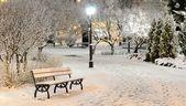 śnieg na drzewach w rydze parku nocą — Zdjęcie stockowe