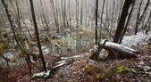 Jezioro piękny zimowy krajobraz na łotwie — Zdjęcie stockowe