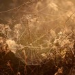 Beautiful spider web — Stock Photo #42688409