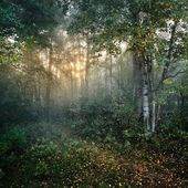 Sunbeams in the forest — Stock Photo