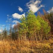 Classical meadow and forest autumn landscape — Stock Photo