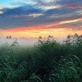 Colorful sunrise at the field with morning fog — Stock Photo